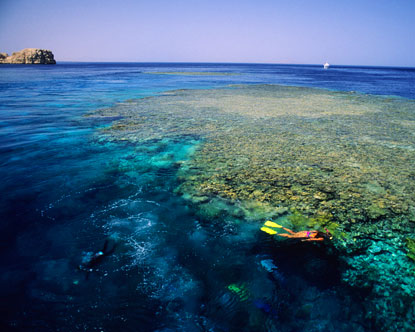 Egypt Snorkeling Sharm El Sheikh Snorkeling Red Sea