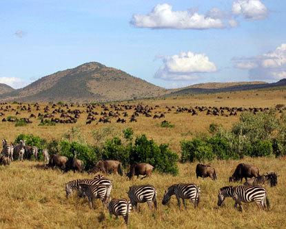 Image result for maasai mara