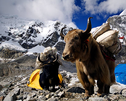 Mount Everest Tours