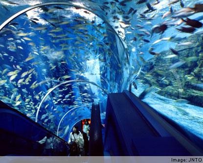 Yokohama Hakkeijima Sea Paradise - Sea Paradise Yokohama