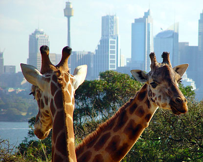 Taronga Zoo Sydney - Sydney Australia Zoo