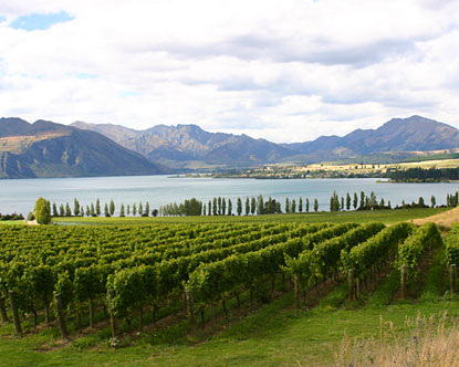 New Zealand Wine Tours