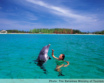 Swim With Dolphins Bahamas