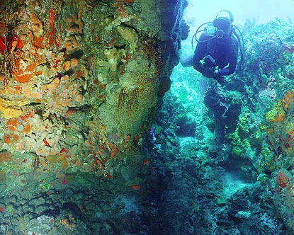 Dominica Diving Virtual Tour
