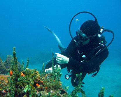 Porquerolles Island, the scuba diving gem of the French ...  |Scuba South France