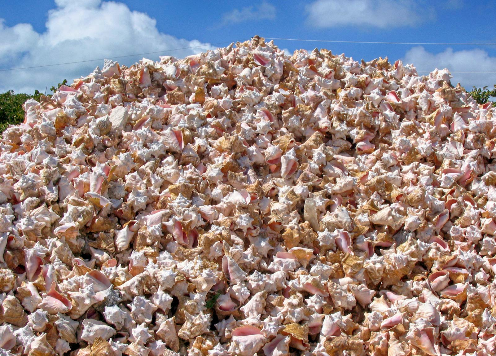 Caicos Conch Farm