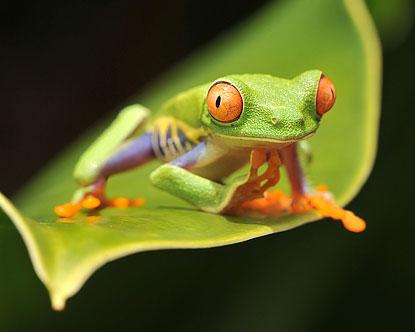Kedvenc fotóink, háttérképeink - Page 2 Costa-rica-animals
