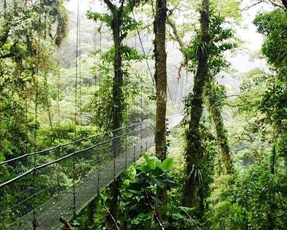 Costa Rica Rainforest Rain Forest Tours In Costa Rica