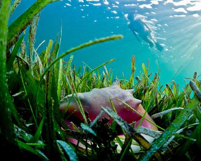 Key West Hotels >> Roatan Snorkeling