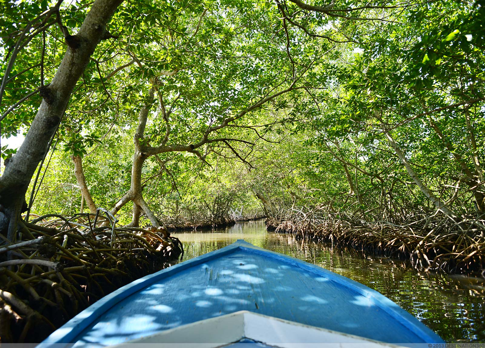 Key West Hotels >> Mangrove Canal Tours Roatan