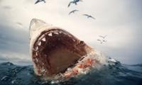 SharkAttk