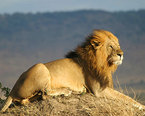 African Lion Safaris