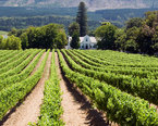 South Africa Wine Tours