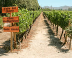 Chile Wine Tours