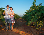 Napa Vineyard Tours