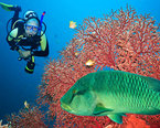 Maldives Diving