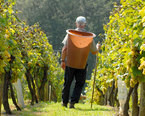 Slovenia Wine Tours
