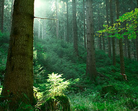 Thuringian Forest