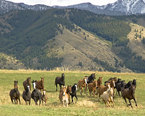 Montana Vacation Ideas