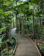 Rainforest Tours