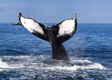 Mexico Whale Watching