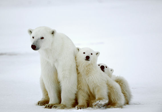 Best Place to See Polar Bears