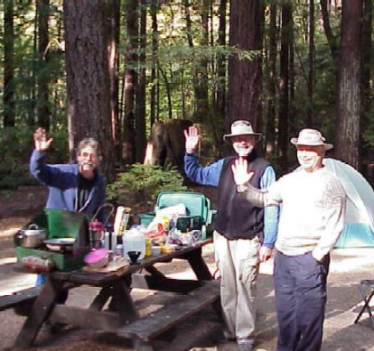 Avenue of the Giants Camping