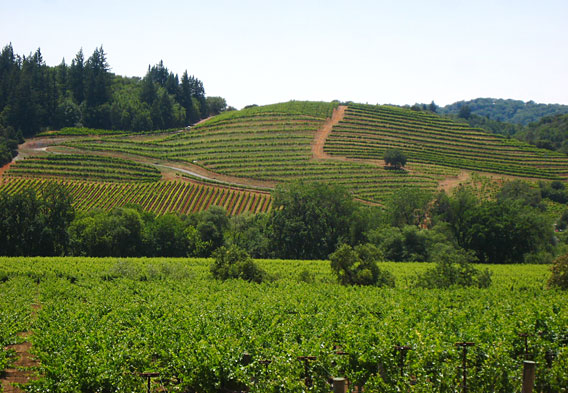 Healdsburg California Wineries