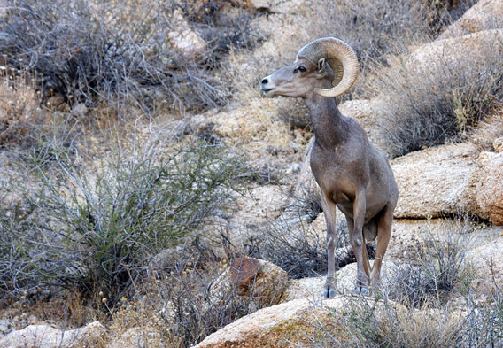 Mojave Desert Animals