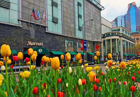 Marriott Magnificent Mile