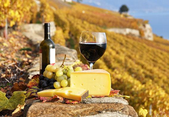 Tuscan White Wine Tours