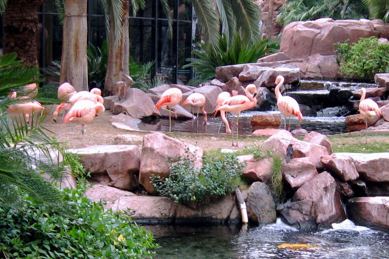 Flamingo Wildlife Habitat