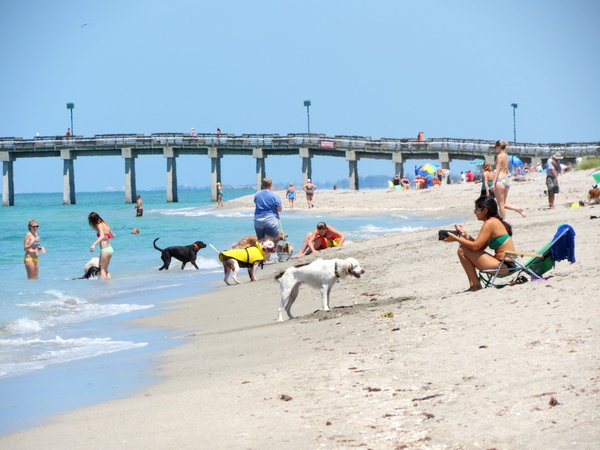 Venice Beach Florida Beaches In Venice Fl Nokomis