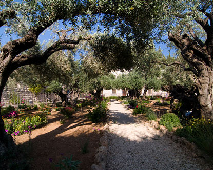 Garden of Gethsemane Mount Olivet Church of All Nations