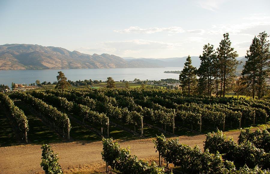 Okanagan Wine Tours Vernon