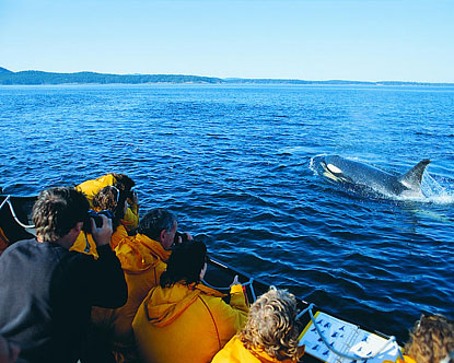 Vancouver Whale Watching Whale Watching Tours In Vancouver