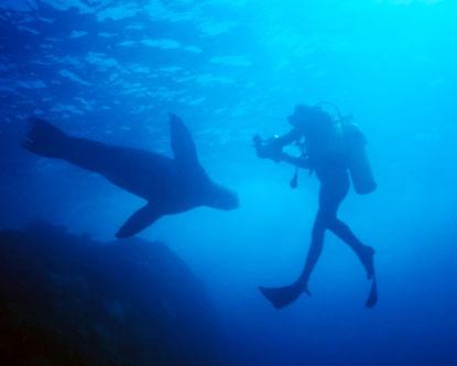 Cabo San Lucas Diving Dive In Los Cabos