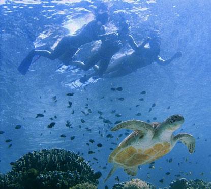 Cancun Snorkeling Cancun Snorkeling Tours