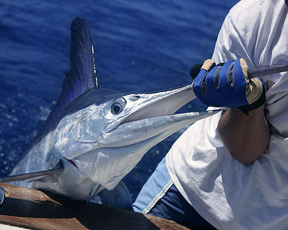 Mazatlan Fishing Mazatlan Sport Fishing Deep Sea