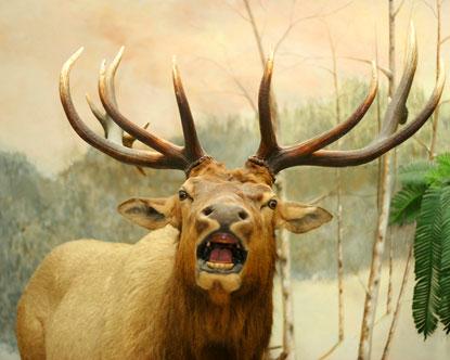 Hunting In Alaska Alaska Hunting Trips