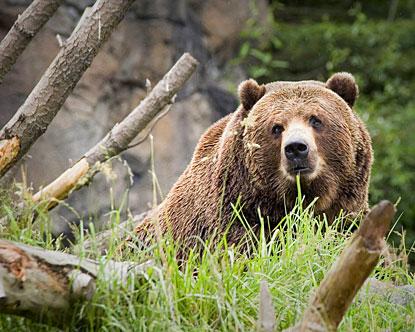 Kodiak Island Kodiak Bears