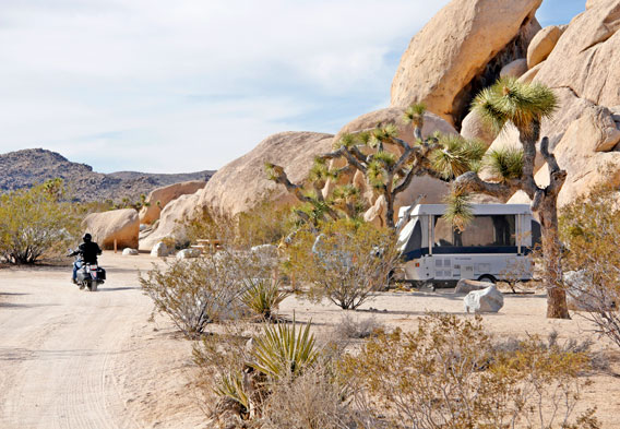 Joshua Tree Belle Campground