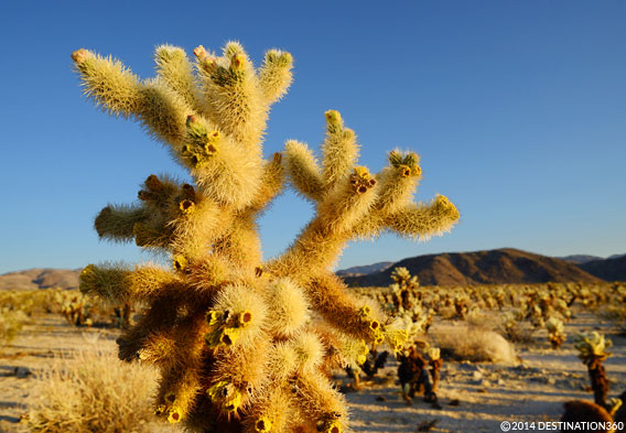 Day Trips to Joshua Tree