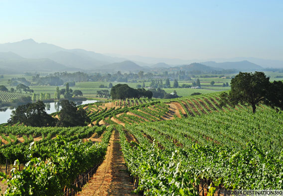 Napa Valley California Day Trips