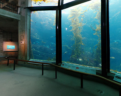 Monterey Kelp Virtual Tour