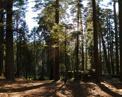 Sequoia National Park Virtual Tour