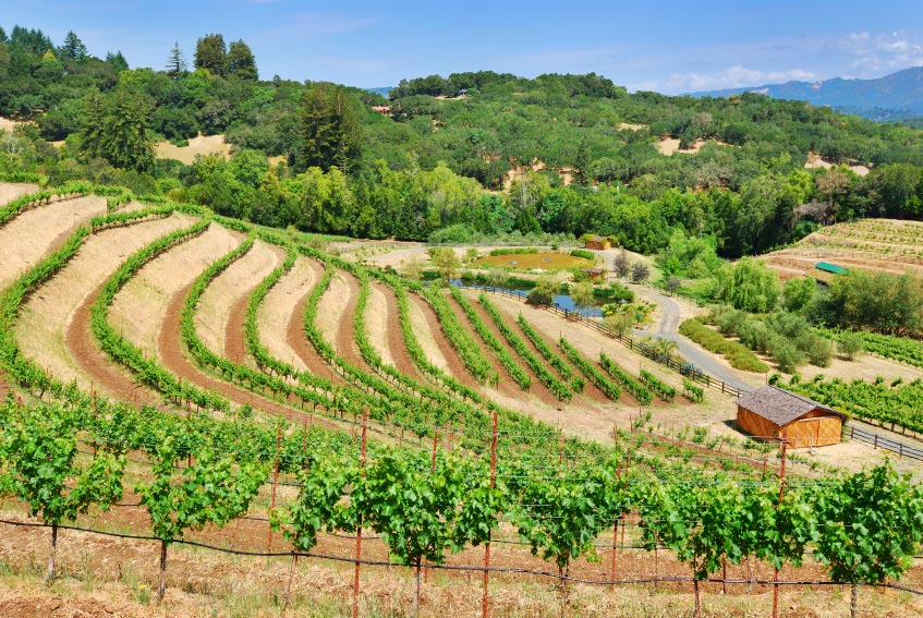 Sonoma Wine Country Dream Wedding