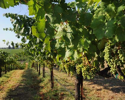 Rubicon Vineyard Virtual Tour