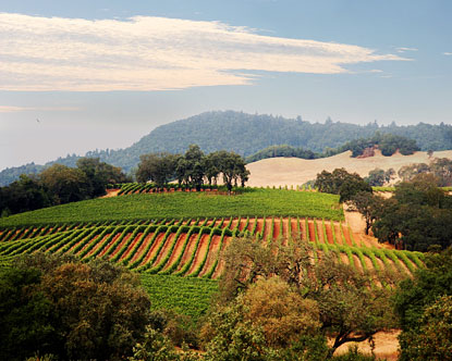 When to Go to Napa