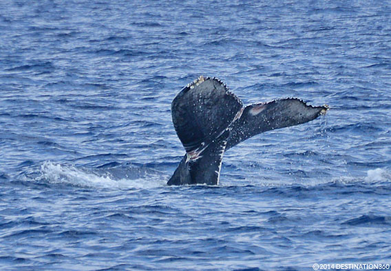 San Diego Whale Watching Tours